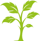Growing Tree 4 Icon
